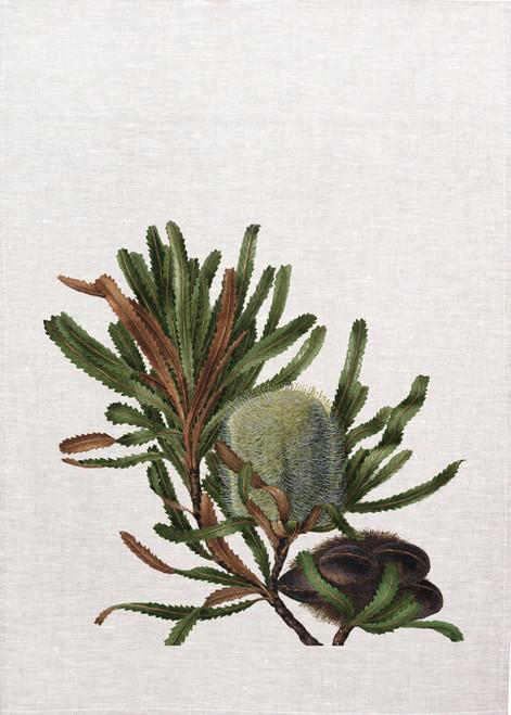 banksia vintage Illustration on tea towel, Made in Australia