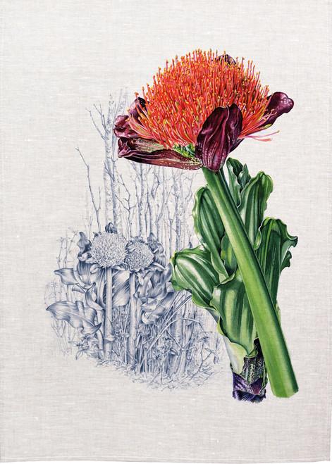 vintage bush flower illustration on tea towel, made in Australia