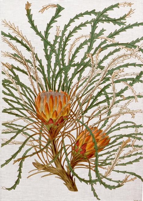 Australian bush flower illustration on tea towel, made in Australia