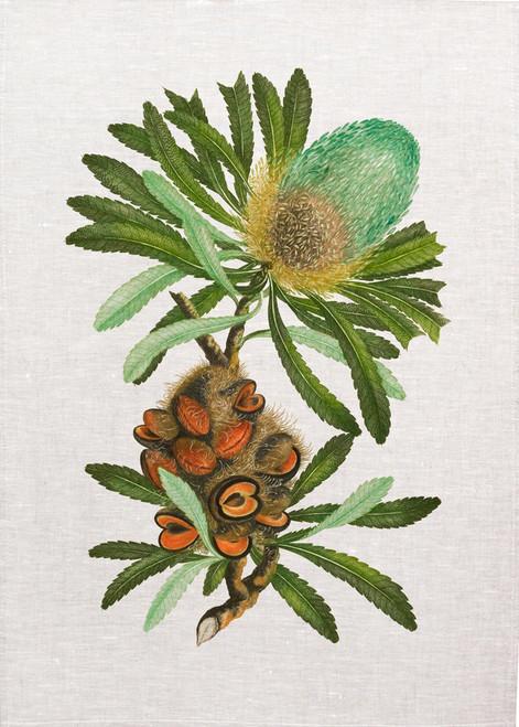 Australian native bush flower illustration, made in Australia