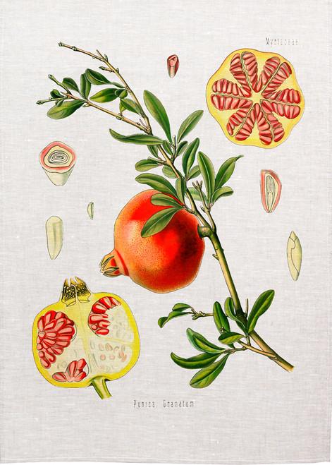 Pomegranate vintage illustration on tea towel, Made in Australia