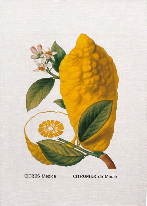 Citrus medica vintage illustration on tea towel, Made in Australia