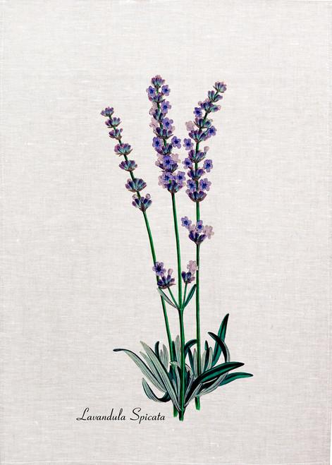Lavendendula spicata printed on tea towel, Made in Australia
