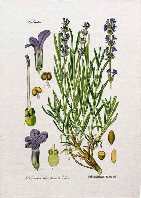Botanical Lavender printed on tea towel, Made in Australia