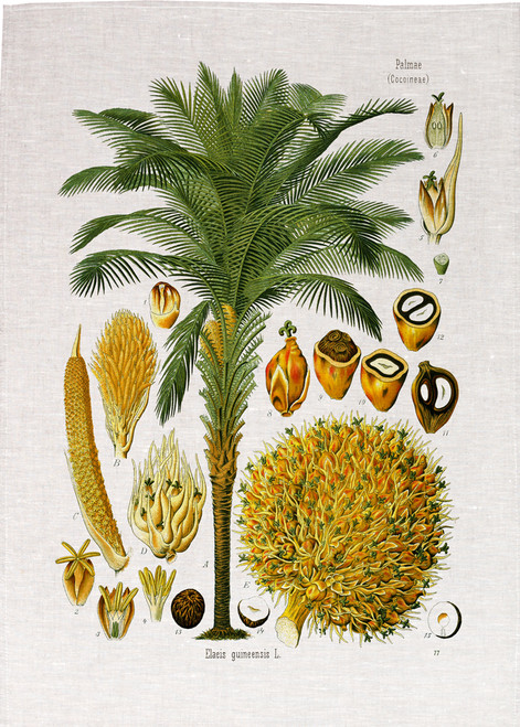 Palmoil illustration printed on tea towel, Made in Australia