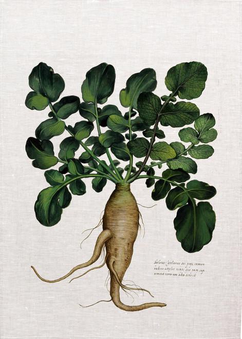Root vegetable illustration printed on tea towel, made in Australia