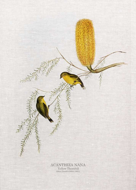 The yellow thornbill (Acanthiza nana), formerly known as the little thornbill, is a tiny passerine bird endemic to the eastern coast of Australia.