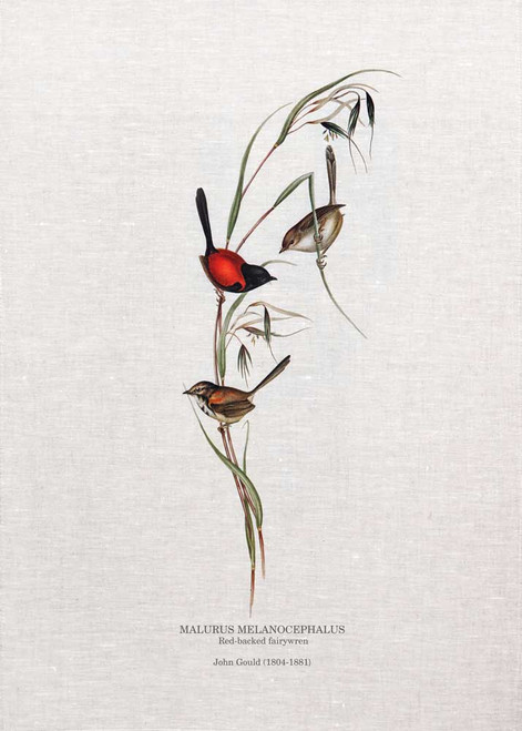 Red-backed fairywren(Malurus melanocephalus) by John Gould printed on tea towel Made in Australia