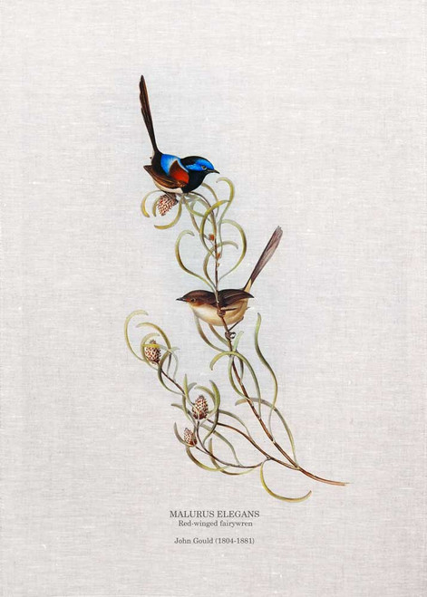 Thered-winged fairywren(Malurus elegans) by John Gould printed on tea towel Made in Australia