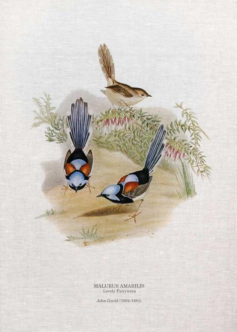 lovely fairywren (Malurus amabilis) by John Gould printed on tea towel Made in Australia