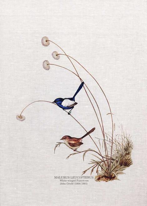 The white-winged fairywren (Malurus leucopterus) by John Gould printed on tea towel Made in Australia