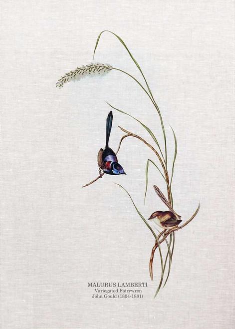 Thevariegated fairywren(Malurus lamberti) by John Gould printed on tea towel Made in Australia