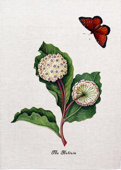 Botanical Illustration The Helisia Teatowels