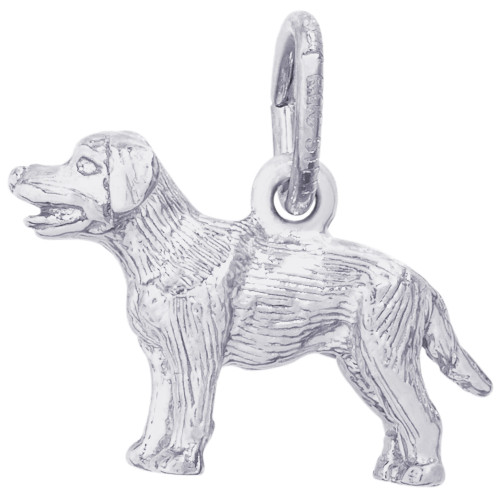 Rembrandt Charms Labrador