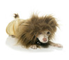Lion Cub Pet Costume