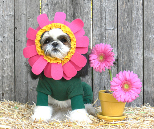 Flower Pet Costume