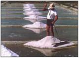SALT STORIES: BRINGING NATURAL SEA SALT TO LIFE!
