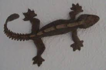 Flying Geckos for sale