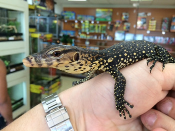 Water Monitors for sale