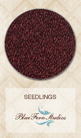 Blue Fern Studios - Seedlings - Burgundy 841682
