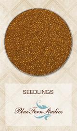Blue Fern Studios - Seedlings - Harvest 841583