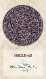 Blue Fern Studios - Seedlings - Lavender 848582