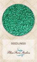 Blue Fern Studios - Seedlings - Emerald 846182