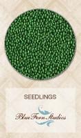 Seedlings - Fir Tree 835988