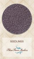 Blue Fern Studios - Seedlings - Lavender 848582