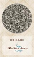 Blue Fern Studios - Seedlings - Sterling Silver 835384