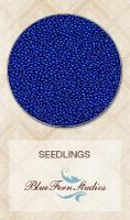 Blue Fern Studios - Seedlings - Electric Blue (688377)