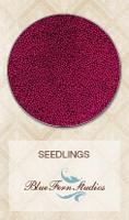 Blue Fern Studios - Seedlings - Maroon (847288)