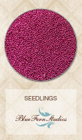 Blue Fern Studios - Seedlings - Vivid Pink (846083)