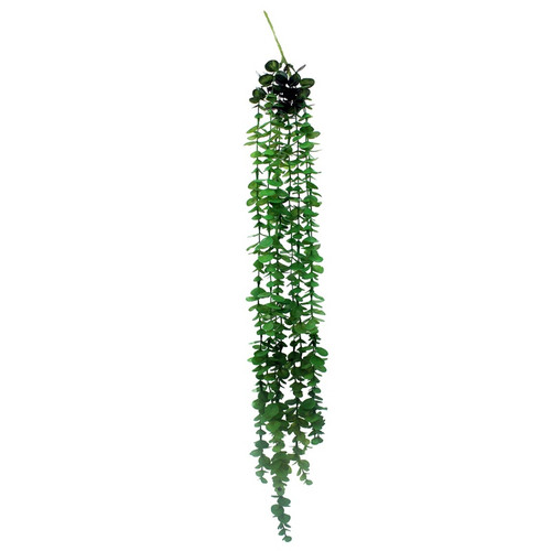 Eucalyptus Cascade Plant 81cm
