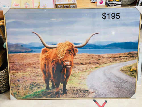 Peter the Highland Cow Canvas