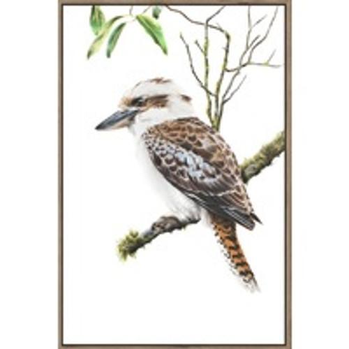 Kookaburra On Branch Framed Canvas