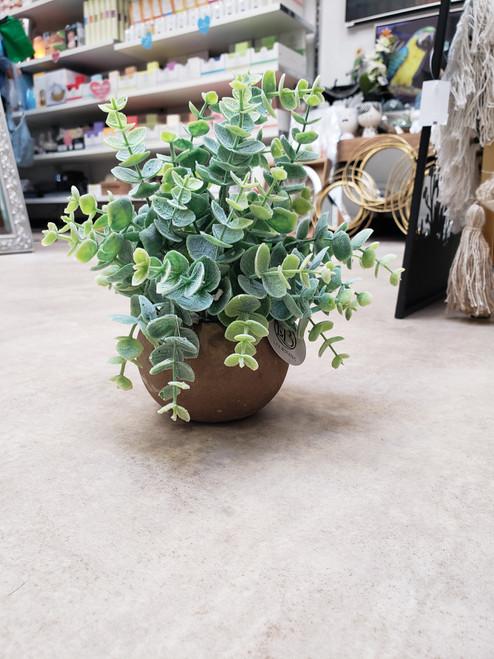 Eucalypt Bunch In Natural Pot 23cm