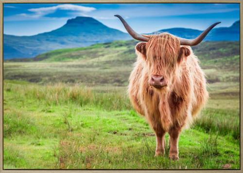 Tom Highland Cow Canvas 100x140cm