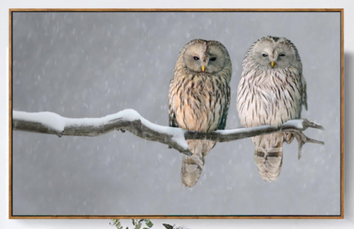2 Wise Owls Framed Canvas