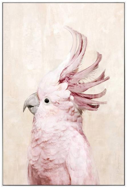 Mia The Cockatoo