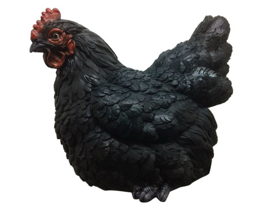 Sitting Black Chicken