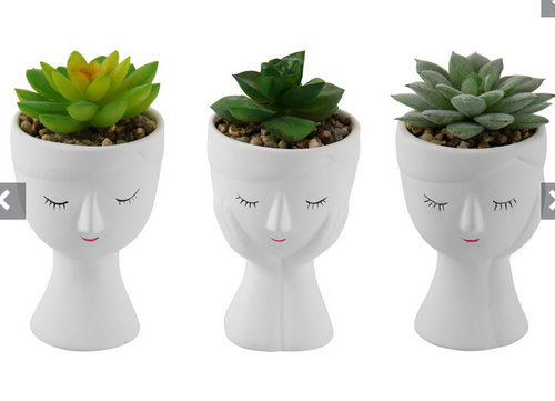 White Face Planter with Succulent