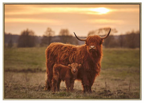 Highland Cow & Calf Canavs