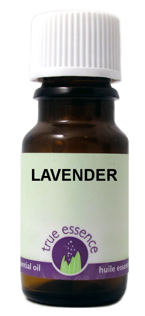 LAVENDER BULGARIA (Lavandula angustifolia) Organic