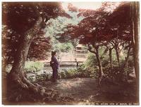 Kusakabe Kimbei, Maples at Takinogawa, Oji, Near Tokyo