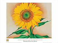 Georgia O'Keeffe, A  Sunflower from Maggie Poster