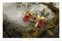 Martin Johnson Heade, Orchids and Hummingbird Poster