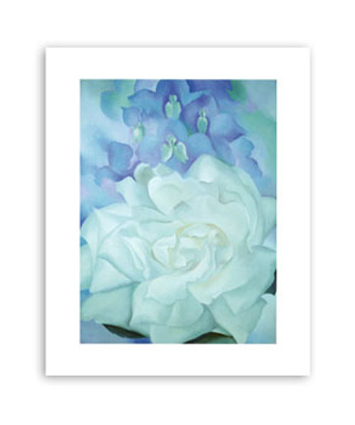 White Rose with Larkspur  11x14  Matted Print