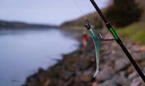 Patriot Fish  Green  Mackerel