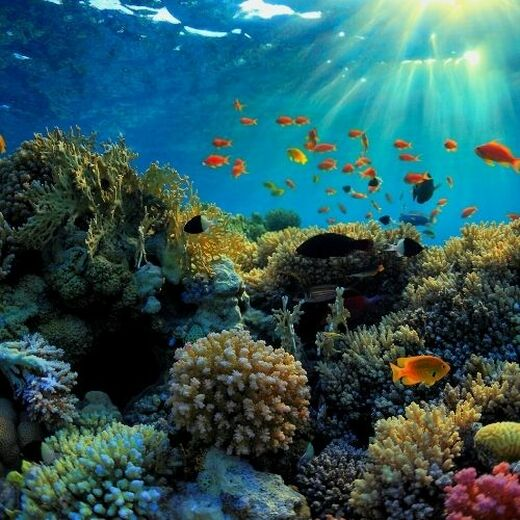 Healthy Skin, Healthy Oceans: All About Reef Safe Skincare